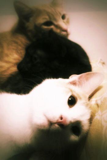 Cat Pets Grunge