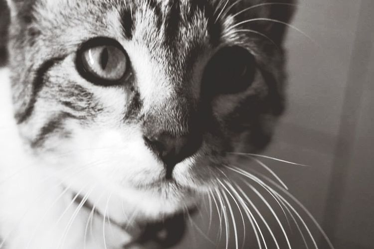 CatFido