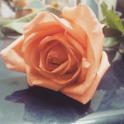 ดอกไม้ เธอช่างสวยงดงามเหลือเกินถ้าอยู่ตรงนั้น! ขอบคุณดอกไม้สวยๆนะฮะ