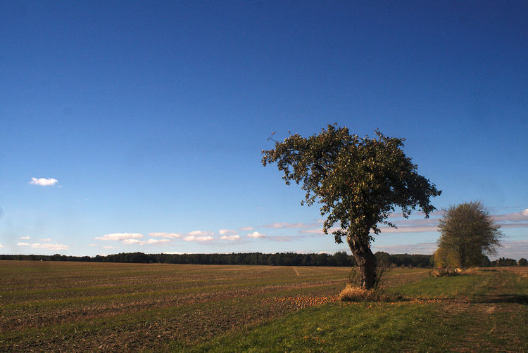 Der Apfelbaum Agriculture Apfelbaum  Beauty In Nature Blue Copy Space Day Environment Field Germany Growth Land Landscape Nature No People Non-urban Scene Oberlausitz Outdoors Plant Rural Scene Saxony Scenics - Nature Sky Tranquil Scene Tranquility Tree Autumn Mood