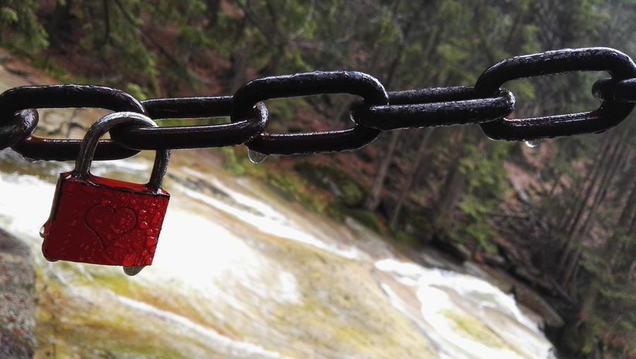 Close-up of padlocks hanging on chain in forest