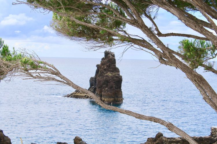 Mountain in the Sea Beach Beauty In Nature Branch Day Driftwood Growth Horizon Over Water Land Nature No People Outdoors Plant Scenics - Nature Sea Sky Tranquil Scene Tranquility Tree Tree Trunk Trunk Water