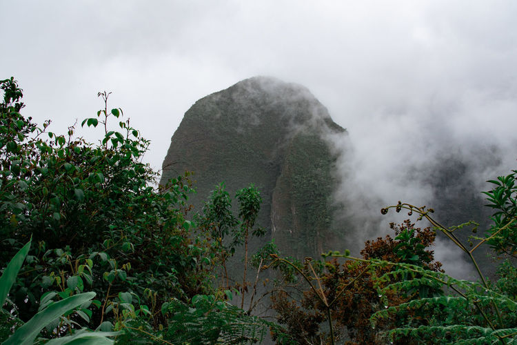 Plant Beauty In Nature Tree Sky Nature Scenics - Nature Growth Green Color Tranquility Non-urban Scene Mountain Tranquil Scene No People Cloud - Sky Day Fog Low Angle View Outdoors Idyllic Machu Picchu Inca Inca Trail