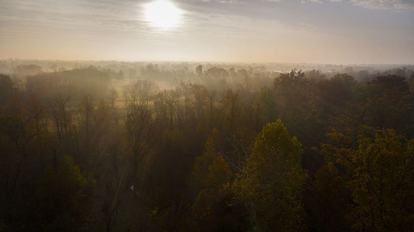 The sun rises above the fog on a fall morning. Drone  Aerial Aerial View Beauty In Nature Day Dji Fog Forest Growth Hazy  Idyllic Landscape Mist Nature No People Outdoors Plant Scenics Sky Tranquil Scene Tranquility Tree