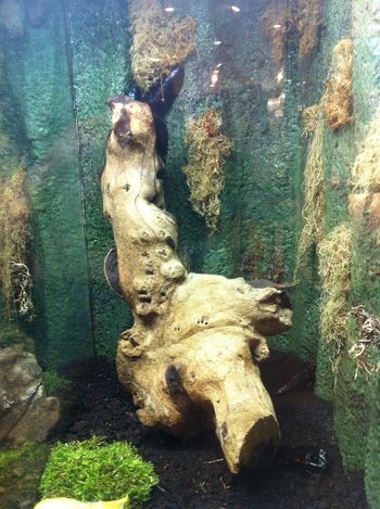 Animal Bone Animal Skull Animal Themes Close-up Day Nature No People Outdoors Skeleton Tree Trunk