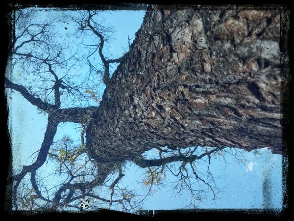 Nature Tree Beautiful Argentina