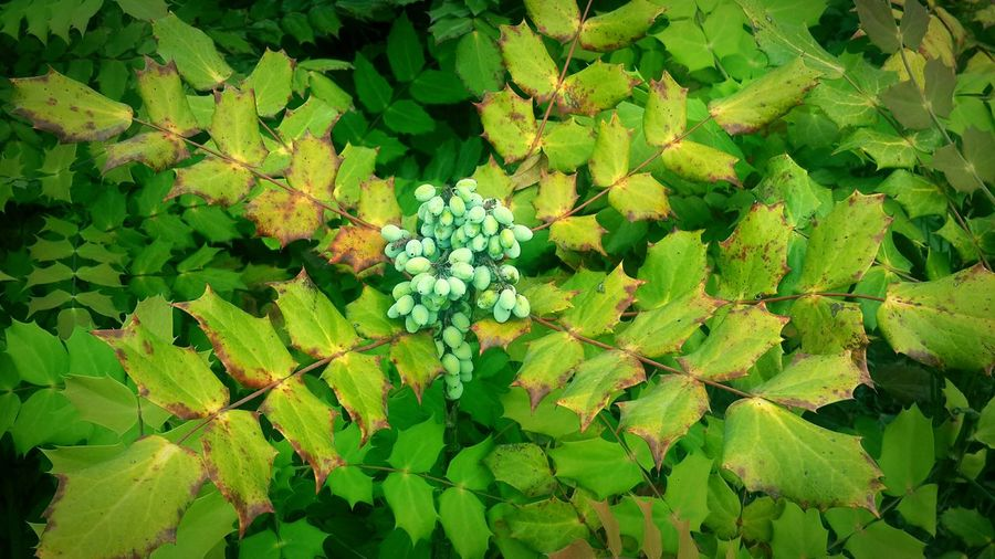 Flowers,Plants & Garden Hanging Out Green Nature Green Plant Outdoors Nature