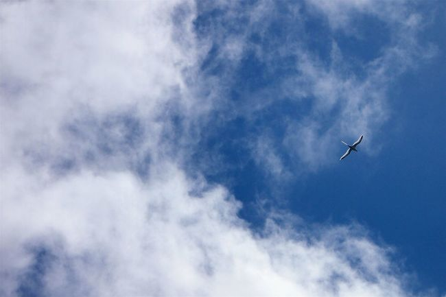 Airplane Beauty In Nature Bird Bird Flying High Cloud - Sky Day Flying Low Angle View Mid-air Nature No People Outdoors Sky