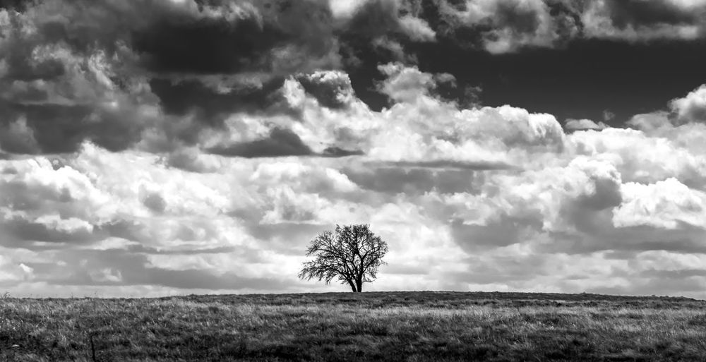Lone tree on a hill near Mossleigh in Vulcan county, Alberta, Canada. Lone Tree Lone Tree Silhouette Lone Tree On A Hill Dramatic Sky Dramatic Clouds Dramatic Light Sony A7RII Black And White Black And White Photography Black & White Black & White Photography High Contrast Bnw Countryside Countryside Landscape Farmland Farmland Countryside Cloud - Sky Sky Environment Land Field Landscape Beauty In Nature Plant Scenics - Nature Tranquil Scene Tranquility Tree Horizon Over Land Nature No People Horizon Day Grass Non-urban Scene Single Tree Outdoors Isolated Composition Nature_collection Nature Photography EyeEm Nature Collection Eyeem Nature Simplicity In Nature My Best Photo