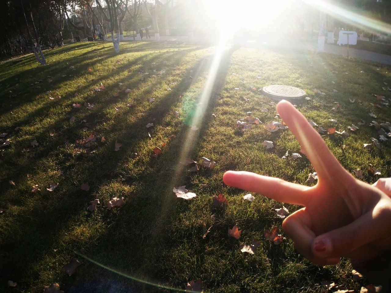 human hand, human body part, one person, real people, human finger, sunlight, tree, nature, outdoors, day, beauty in nature, grass, close-up, people