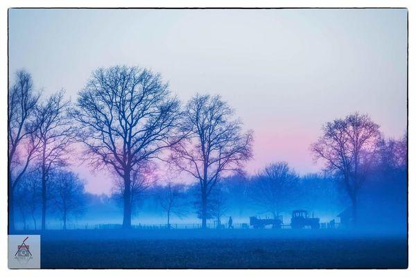 Outdoors Tree Misty Evening Foggy Day Foggy Landscape Farmer's Life