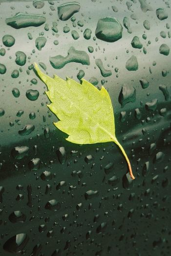 Leaves🌿 PhonePhotography Rain Rainy Days Raindrops Naturelovers Nature Nature On Your Doorstep Green Shadesofgreen Naturevsmanmade Phone Photography Leaves Greenleaf Focus Water Waterdrops