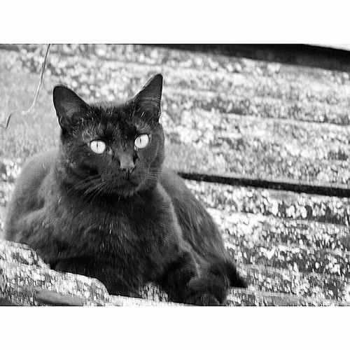Disfruta estar en el techo Cats Cats Lovers  Funny Gatos Adorables Villavicencio