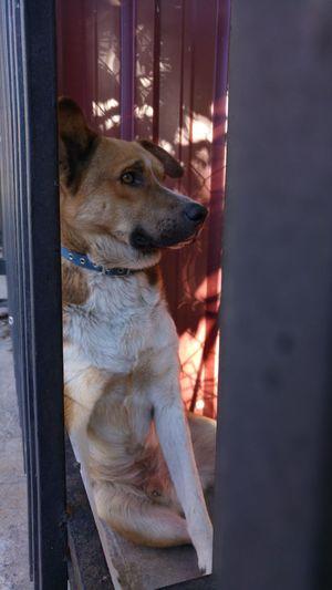 Animals Posing Dog Sad Dog Eyes Sad Eyes Stray Dog Thinking Deeply, Thinking Dog Thoughtful LG G4📱 Lgg4photography