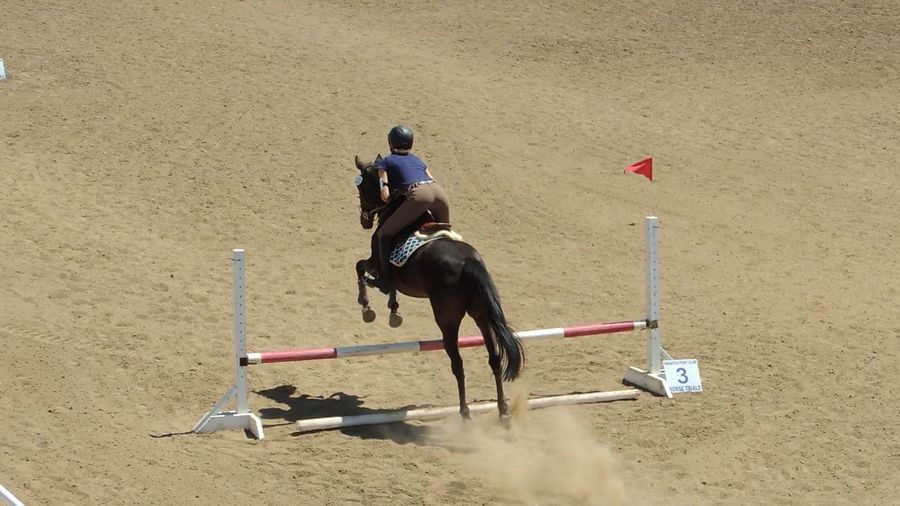 Big Butts Eventing Horse Horse Riding Horses Intro Level Jump Liz The Mare