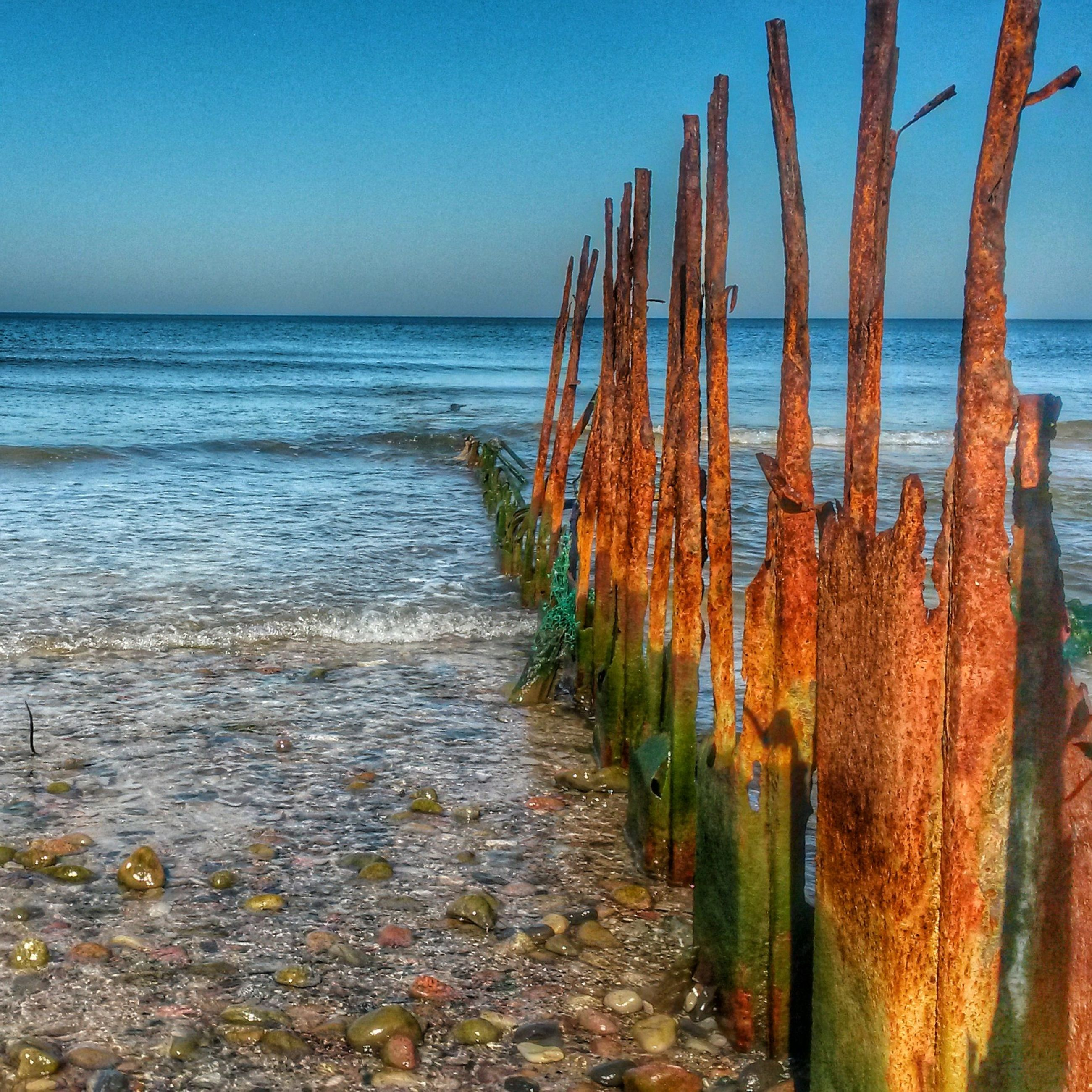 sea, horizon over water, water, beach, tranquil scene, tranquility, clear sky, beauty in nature, nature, scenics, blue, shore, plant, sky, growth, the way forward, sand, idyllic, copy space, day