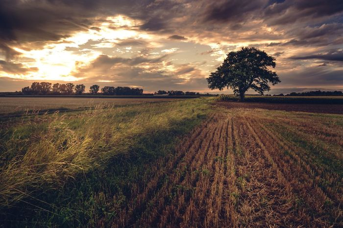 Sunset Field Nature Cloud - Sky Sky Landscape Growth Beauty In Nature Agriculture Scenics Tranquil Scene Tranquility Tree Rural Scene No People Outdoors Day
