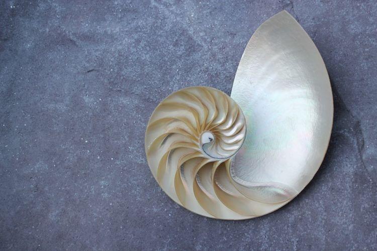 High angle view of shell