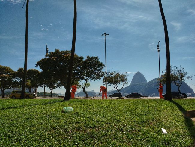 Men Working Men At Work  Cleaning Sugarloaf Mountain Palm Trees Pão De Açucar Cloud - Sky Nature Outdoors Travel Destinations Litter Landscape Grass Tropical Scenics Brazilian Third World Country Developing Country Mountain Peak Backgrounds Beauty In Nature Bay Low Angle View City Life