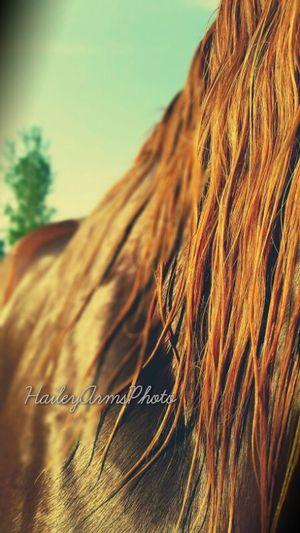 Tequila after her bath ? Nature EyeEm Best Shots Horses Summer