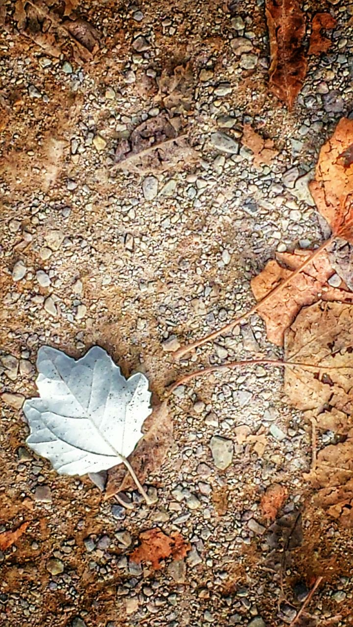 leaf, autumn, dry, nature, change, no people, day, outdoors, close-up, fragility
