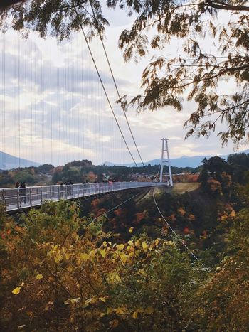 EyeEmNewHere Tree Built Structure Connection Cable Nature Sky Day Architecture Outdoors No People Bridge - Man Made Structure Shot On IPhone. Landscape Autumn Beauty In Nature Plant Leaf Transportation Mountain Travel Destinations Scenics