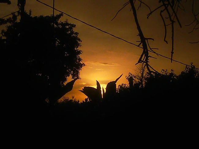 sunset this evening 💕💕💕 Bird Tree Sunset Silhouette Agriculture Rural Scene Sky Plant Romantic Sky