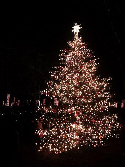 Merry Christams Christmas Tree Christmas Lights Japan Eyemphotography EyeEm Best Shots Followme