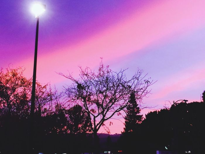 Purple sky Cupertino CA Sunset Pink Sky Tree Sunset Silhouette Pink Color Sky Nature Beauty In Nature No People Tranquility Tranquil Scene Outdoors Purple Scenics Illuminated Night