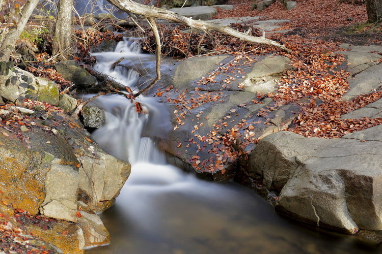 River flowing through rock formation in forest