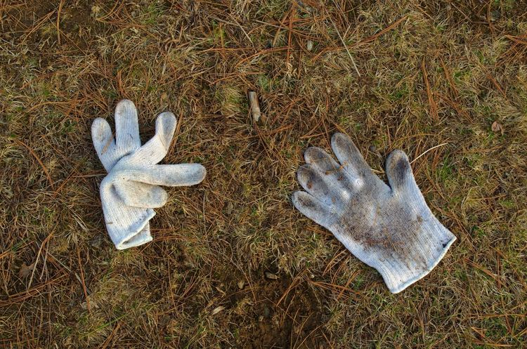 Dirty white gloves lay flat on the ground, lost and abandoned among grass and pine needles. (One from a series of five images.) Forgotten Lost Winter Abandoned Close-up Clothing Dirty Dreary Flat Gloves Grass Misplaced Outdoors Plain Ruined White Color