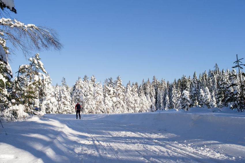 Cross-country skiing Cross-Country Skiing Adventure Beauty In Nature Clear Sky Cold Temperature Day Full Length Landscape Leisure Activity Lifestyles Nature Outdoors Scenics Shadow Ski Holiday Skiing Sky Snow Sport Sunlight Tranquil Scene Tree Winter