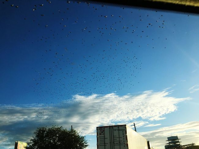 Nature Birds Flying View On The Road Sky Enjoying The View