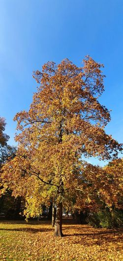Tree against sky during autumn