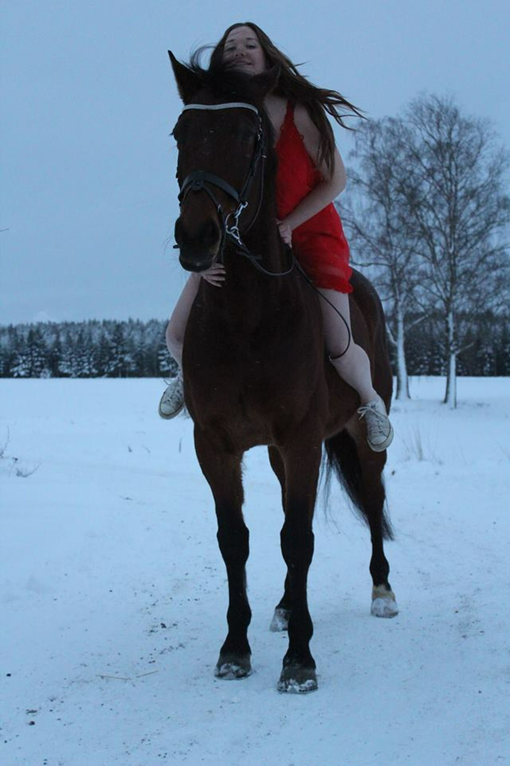 snow, winter, cold temperature, domestic animals, animal themes, horse, one animal, mammal, working animal, field, standing, dog, clear sky, season, landscape, full length, one person, livestock, front view, outdoors