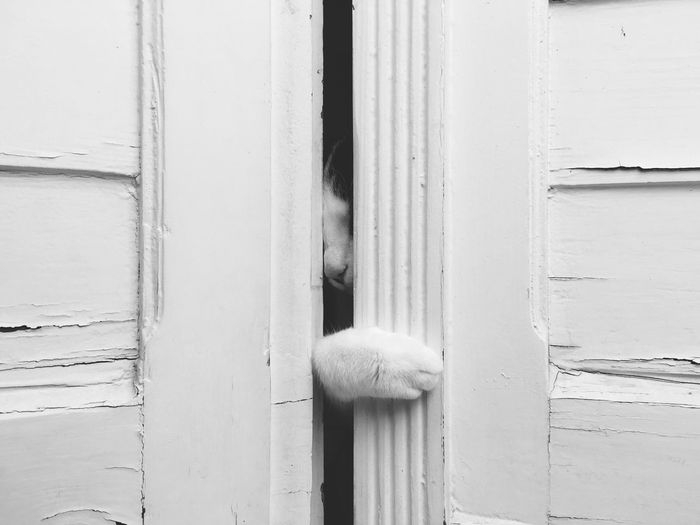Close-up of cat behind door