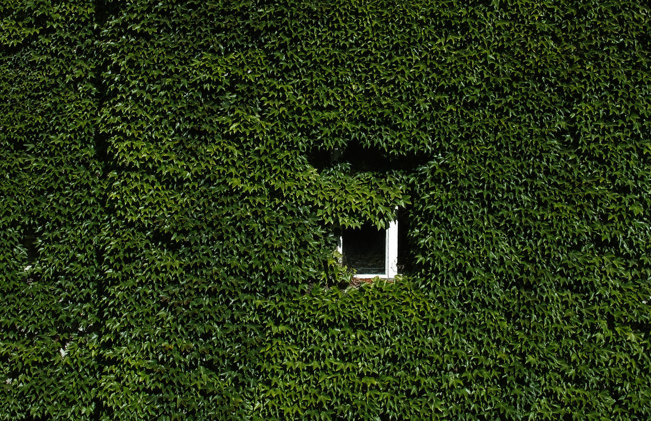 Full frame shot of ivy growing on building exterior