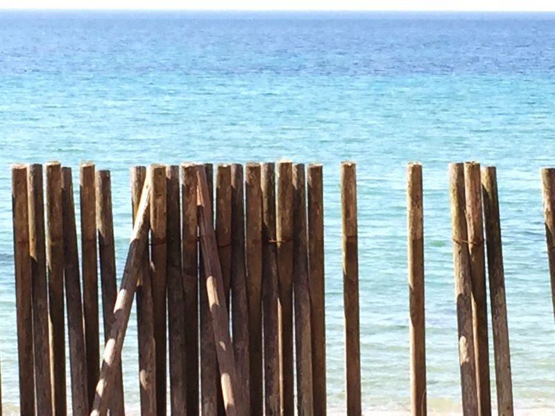Woodsticks Wooden Stakes Wooden Stake Stake Posts Wooden Post Beach Beachphotography