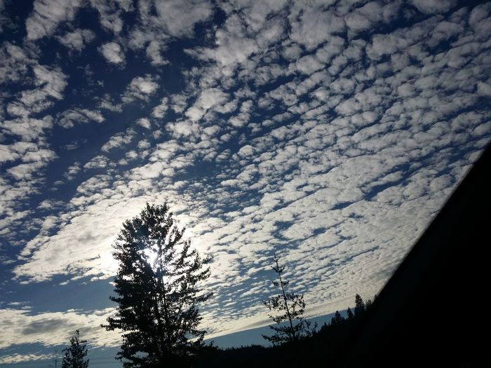 Sky And Clouds Sky_collection Skyskape Sky Photography Clouds And Sky Clouds Collection Cloud Formations Low Angle View Low Angle View Day Low Angle Perspective Clouds And Sky Variation Cloudscapes Clouds And Trees Sky_collection