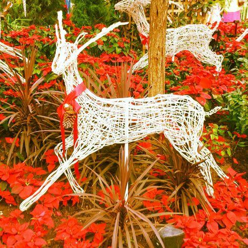 Reindeer Christmas Bell Botanical Gardens Marina Bay Singpore♥Beautiful