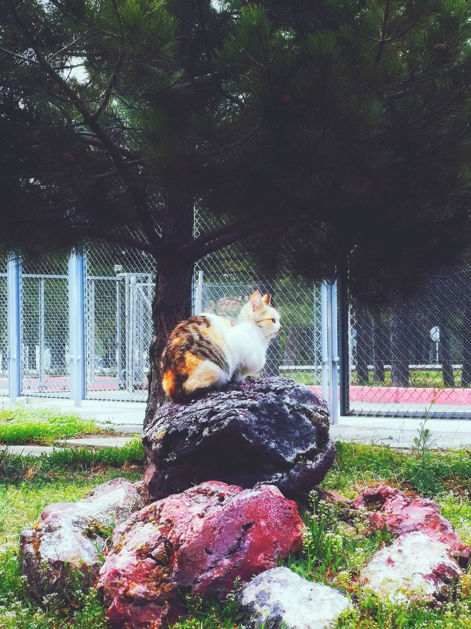animal themes, mammal, animal, one animal, vertebrate, domestic, pets, domestic animals, plant, tree, sitting, day, no people, cat, nature, animal wildlife, domestic cat, feline, grass, built structure