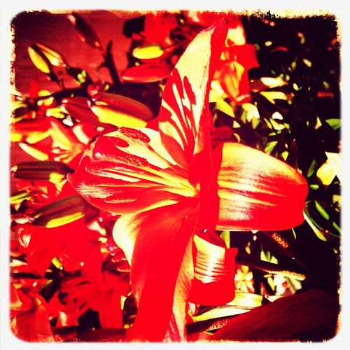 a beautiful orange Lilly. Taking Photos At Calderbank Nature_collection EyeEm Nature Lover Eyem Best Shot