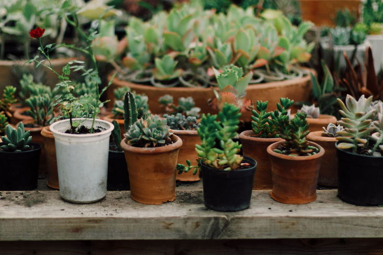 Close-up of small potted plants in yard