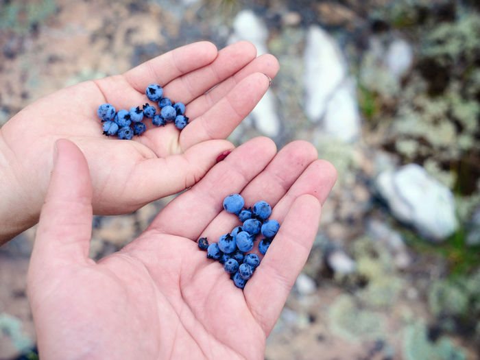 Close-up of cropped hands holding blueberries