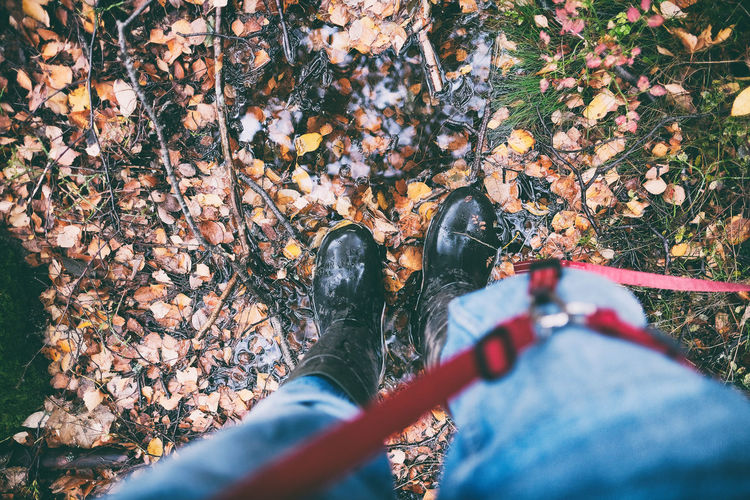 Low section of person wearing autumn leaves in forest
