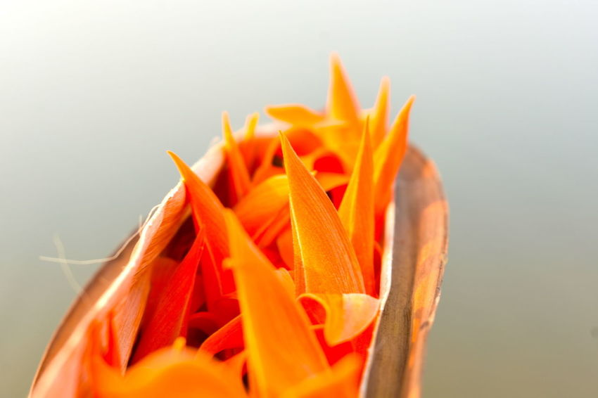 Close-up Day Freshness Nature No People Orange Color Outdoors Tropical Orange Wild Flowers As Background