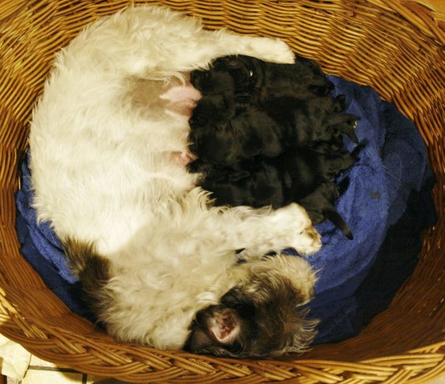 Dogs Hunde Liebe ♡ Welpen Babies Babydogs Domestic Animals Motherhood Moments Puppies Young Animal