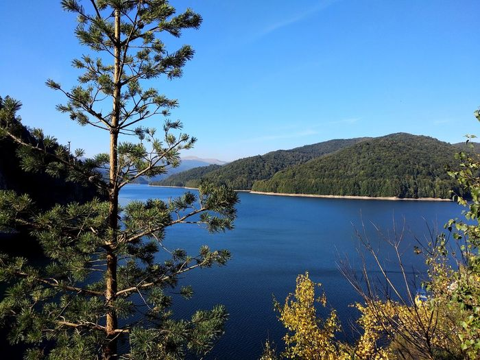 My heart is wild, like this beautiful place. EyeEm Nature Lover EyeEmNewHere Autumnbeauty Autumn Mountain Lake Tree Clear Sky Water Blue Lake Mountain Sky Plant Pine Woodland Fall Autumn Mood