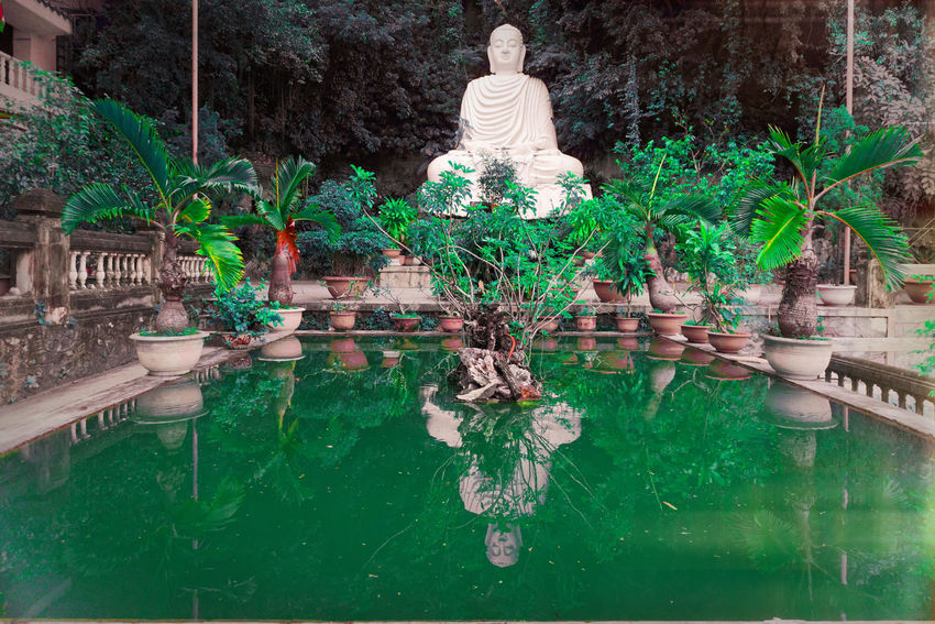 Zen Vietnam Danang, Vietnam Buddha Buddhism Buddha Statue Reflection Zen Meditation Tree Outdoors Water Day Statue No People Sculpture