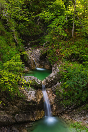 Koritnica waterfalls Beauty In Nature Flowing Flowing Water Forest Green Color Growth Idyllic Lush Foliage Motion Nature Outdoors Scenics Color Palette Slovenia Stream Tree Water Waterfall